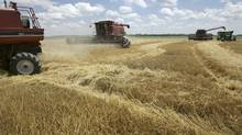 Combines harvest wheat in Arkansas (Danny Johnston/Danny Johnston/AP)