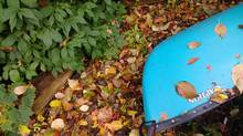 Fallen leaves on canoe. (Fred Lum/The Globe and Mail)