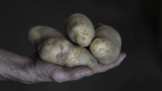 For Prince Edward Island, potatoes aren't just another commodity; they are a huge part of the economy. Potato farming is worth more than $1-billion annually to the province, and 12 per cent of the island's population works in the sector. (NATHAN ROCHFORD FOR THE GLOBE AND MAIL)