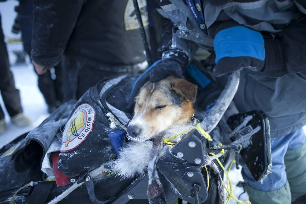 Images from The Yukon Quest international sled dog race