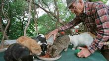 Rene Chartrand was one of several long-time volunteers at the Parliament Hill cat sanctuary in Ottawa. (Peter Jones/REUTERS)