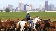 As Calgary becomes a city of immigrants, how can it retain its rodeo sensibilities? (PATRICK PRICE/Reuters)