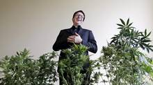 Daniel Curylo laughs while posing with some of the marijuana plants that he uses for marketing purposes in Seattle on Wednesday, Nov. 13, 2013. His goal? A cannabis business park northwest of Olympia that would feature his growing operation, Cascade Crops, as well as retail stores run by his mother, father and aunt. (Elaine Thompson/AP)