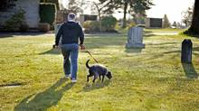 Dogs are likely to be hounded from Courtenay Civic Cemetery within weeks. City councillors last night agreed the rules ought to be changed to ensure dignity and respect is maintained at the facility. (ERIN WALLS FOR THE GLOBE AND MAIL/ERIN WALLS FOR THE GLOBE AND MAIL)