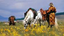 We came to Mongolia to ride horses. They were small, scruffy and tough as nails. (Bruce Kirkby)