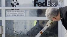 Prime Minister Stephen Harper looks over at Da Mao, one of two Panda bears as it peers out of a container after arriving by FedEx transport jet March 25, 2013 in Toronto. The two bears, on loan from China, will spend time at both the Toronto and Calgary Zoos. (Moe Doiron/The Globe and Mail)