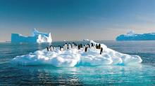 Adelie penguins drift on ice floe in the Southern Ocean off the Australian Antarctic Territory (AFP/Getty Images)