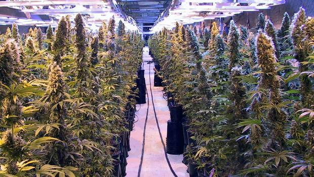 how to get a growing weed license in california