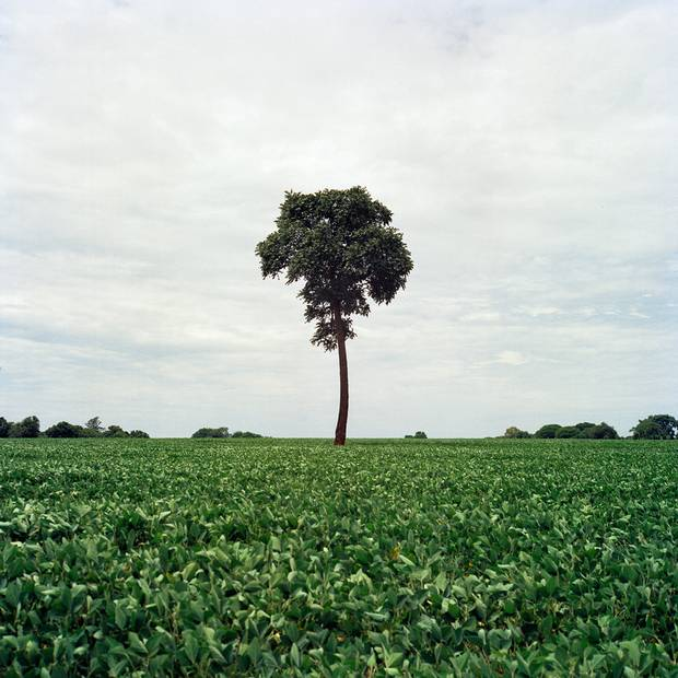 A soy field next to the village of Jiguarapiru. Traditional Guarani-Kwaiowa land is today the heart of Brazil's agro-industry, a booming sector in an otherwise moribund economy. The highly mechanized farms employ few workers, and people on the reserve say white bosses don't like to hire 'Indios.'