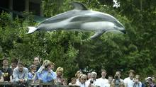 Spinnaker flying high above the crowd at the Vancouver Aquarium in Vancouver July 16, 2003. (John Lehmann/ The Globe and Mail/John Lehmann/ The Globe and Mail)