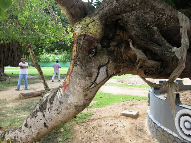 A tree painted to look like an elephant beside the Piliyar temple in Atchuvely. The temple was built to honour Piliyar, the elephant-faced god.