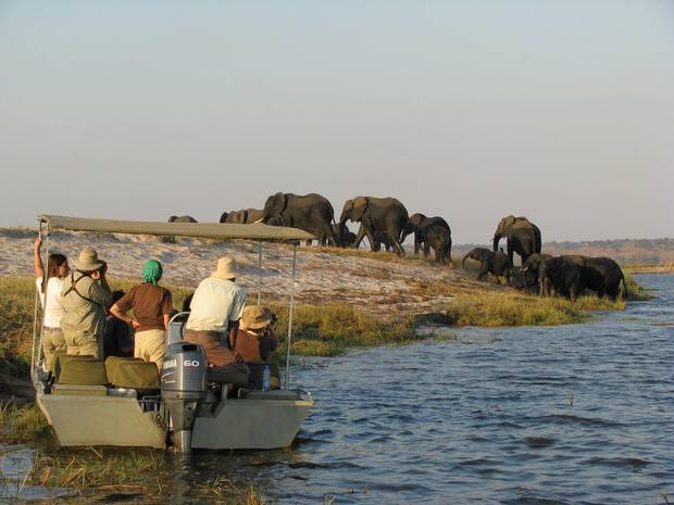 A couple of times a day, the writer and other guests boarded a small tender to get even closer to the Botswana side of the river, where Chobe National Park protects great herds of elephants and Cape buffalo.