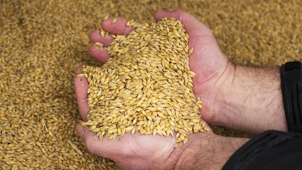 Malting barley farmer Doug Herman on his farm near Drumheller, Alta.