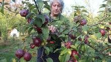Ice-cider pioneer Christian Barthomeuf, in his grove of cider apples at Clos Saragnat in Frelighsburg, Que. (Adam Leith Gollner for The Globe and Mail)