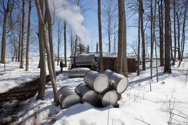 Maple syrup product making operation, in Beachville, Ont.