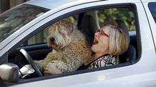 Mary Lou Fallis and her dog Percy in her Toyota Echo. (Moe Doiron/Moe Doiron/THE GLOBE AND MAIL)
