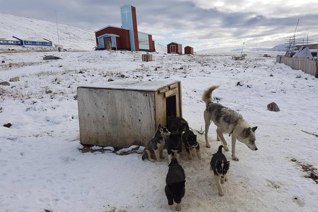 Sled dogs and church, Qaanaaq, Greenland.