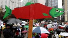 A cutout of a sockeye salmon is raised above the crowd during a demonstration to coincide with the start of the Cohen Commission Inquiry into the 2009 decline of sockeye salmon in the Fraser River, in Vancouver, B.C., on Monday October 25, 2010. (Darryl Dyck/ The Canadian Press/Darryl Dyck/ The Canadian Press)