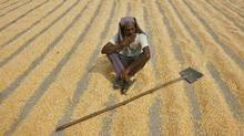 A labourer smokes while taking a break from spreading maize crop to dry at a wholesale grain market in the northern Indian city of Chandigarh September 29, 2011. (AMIT DAVE/REUTERS)