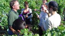 In the vineyard at harvest time, Brock University viticulturist and researcher Dr Kevin Ker talks to students about ampelography, identifying grapevines by variety. (Brock University)