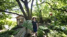 "Hilary Scharper is seen next to a tree that caused a dispute between her and her neighbours in Toronto, Ont. Friday, ""This could impact 60 per cent of Toronto's trees,"" Ms. Scharper said. June 14, 2013. (Kevin Van Paassen/The Globe and Mail)"