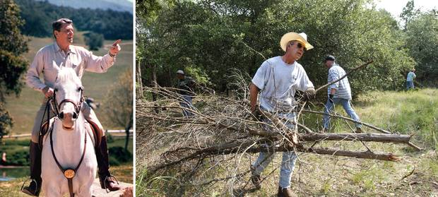 March 19, 1985: Ronald Reagan rides a horse at Rancho del Cielo, 'Ranch in the Sky,' northwest of Santa Barbara, Calif. Aug. 9, 2002: George W. Bush clears cedar at his 650-hectare (1,600 acre) ranch in sun-baked Crawford, Texas.