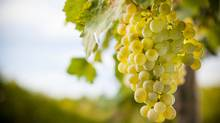The O-word (organic) still carries such a stigma that many top vintners eschew the label, leaving consumers in the dark. (Alberto Bogo/Thinkstock)