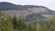 An investigation by B.C.'s foresty industry watchdog has shown government compliance inspections on forestry and cattle range practices fell by a third between 2009 and 2012. (JONATHAN HAYWARD/THE CANADIAN PRESS)