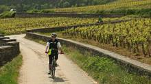 Flat valleys and more challening hills make Burgandy a great spot for a cycling holiday in France.