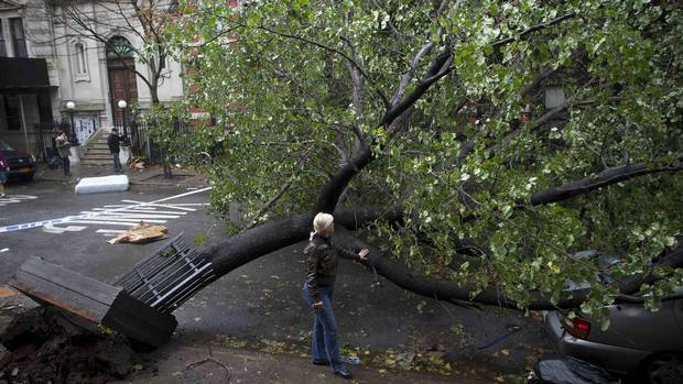 A woman touches a fallen tree in Manhattan's Alphabet City neighborhood in the aftermath of Hurricane Sandy in New York October 30, 2012. (Andrew Kelly/Reuters)