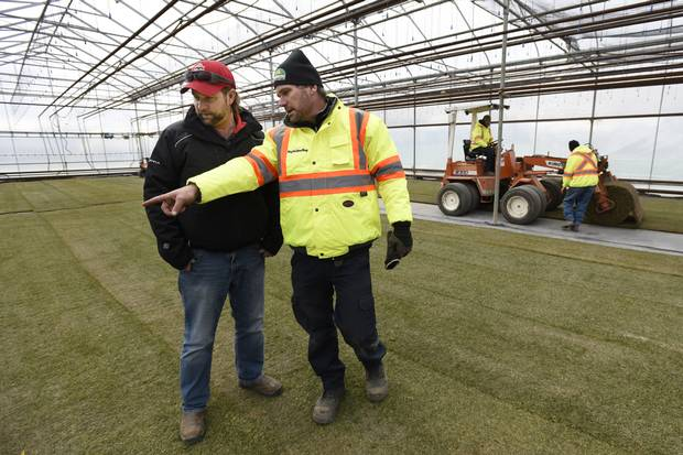 Robert Heggie, head groundskeeper at BMO Field, and Scott Hunte of Green Horizons discuss sod being laid down at Green Horizons' greenhouse in Vineland, Ont.