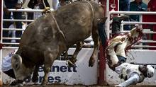 Bull riding event at the Calgary Stampede (Jeff McIntosh/Jeff McIntosh/The Canadian Press)