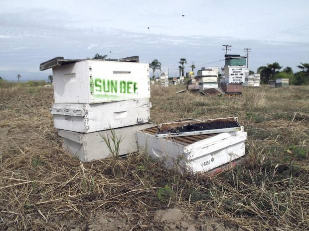 Several of the thousands of recovered beehives stolen in California are shown in this May 16, 2017, photo near Sanger, Calif.