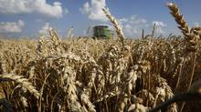 What's fair for grain farmers is by implication less fair for every other business that uses the rails to move goods (Jim Young/Reuters)