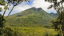 Mount Kahuzi volcano emerges from a bamboo forest habitat in Kahuzi-Biega National Park in the Democratic Republic of Congo. (Alamy)