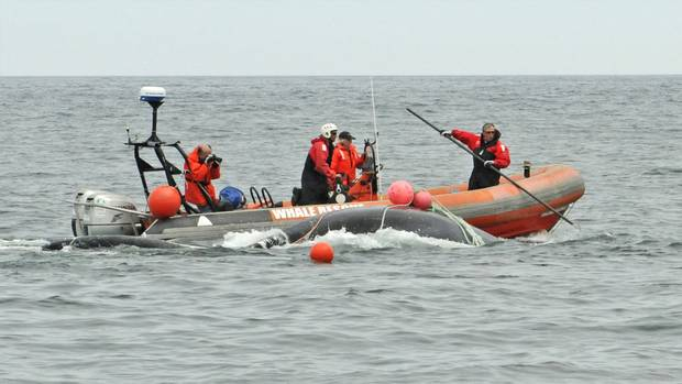Joe Howlett of the Campobello Whale Rescue Team, right, works from the bow of a boat disentangling endangered right whales. Mr. Howlett died in July when a whale he had just freed struck his boat with its tail.